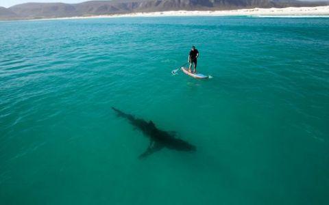 Vasleste la cativa metri de rechini! Crezi ca a scapat?