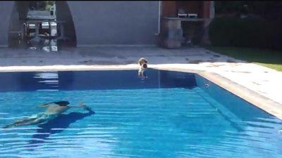 Uite cum poti speria o pisica! VIDEO