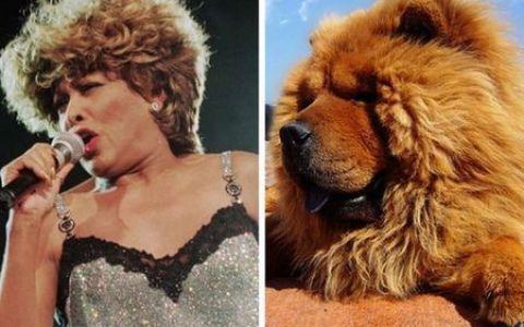 Tina Turner arata ca un Chow Chow! Vedetele si corespondetii lor din randul animalelor. GALERIE FOTO
