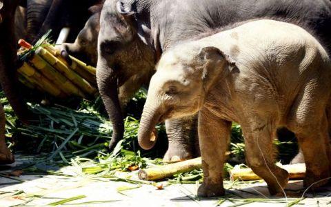 Uite ce cadou dragut a primit un bebe-elefant de ziua lui! FOTO