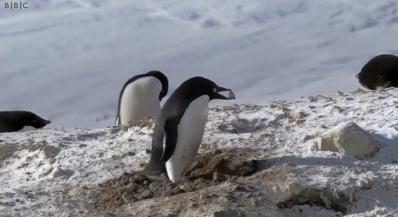 Clipul cu pinguinul hotoman face senzatie pe net :) Merita sa il vezi! VIDEO