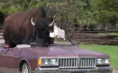 VIDEO. Uite cum arata cel mai mare animal de companie din lume: