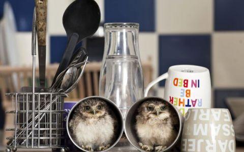 Cum e sa ai DOUA BUFNITE MICI pe post de animale de companie. Care sunt locurile lor preferate din casa: