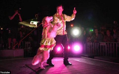 Catelul atat de talentat la dans, incat si Mihai Petre ar fi gelos pe el :) Vezi cum se misca pe ritmuri de merengue. VIDEO