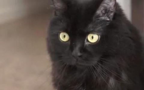 Cum sa-ti dresezi stapanul. Lectie predata de Kodi, cea mai aroganta pisica din lume: VIDEO AMUZANT