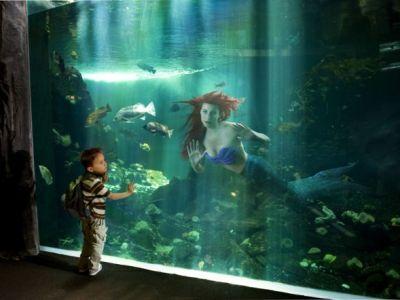 Ariel din Mica Sirena