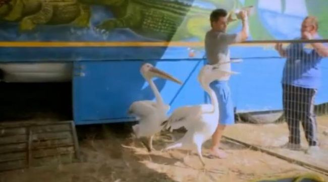 "Razvan Fodor, <span style=""color:#f00;"">pacalit sa faca BALET printre pelicani.</span> Nea Marin nu se mai putea opri din ras: VIDEO"