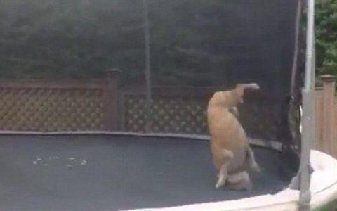 Se bucura ca un copil. Reactia super amuzanta a unui catel care se joaca in trambulina. VIDEO