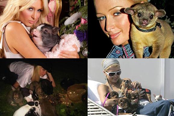 Iulia Albu nu este singura vedeta cu un animal de companie neobisnuit. Afla ce alte vedete au ales sa creasca in casa tigri, soparle sau chiar cobre