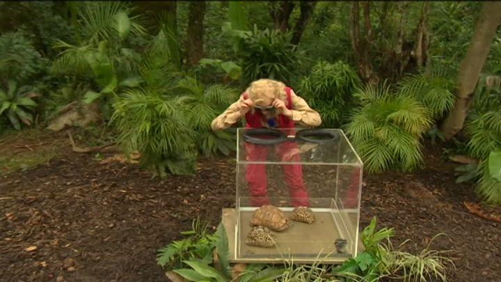 Cutia ororilor - Luminita, fata in fata cu prima provocare a junglei