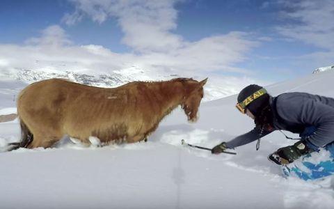 Un cal a ramas blocat in zapada 4 zile. Cum reactioneaza atunci cand un strain se apropie de ea si incearca sa o ajute