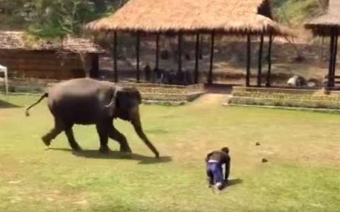 Un barbat a fost trantit la pamant de un coleg in timp ce se afla in apropierea unui elefant. Ce a urmat a ajuns viral