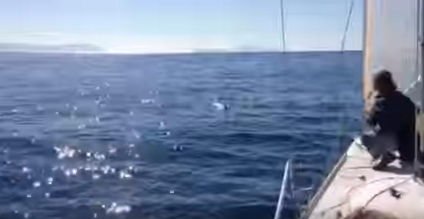 Navigau in larg cand au observat ceva in apa. Ce s-a intamplat mai apoi este o scena pe care nu o vor uita prea curand