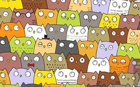 Dupa ce toata lumea a incercat sa gaseasca ursul panda dintr-o imagine, pe internet circula un al doilea puzzle.