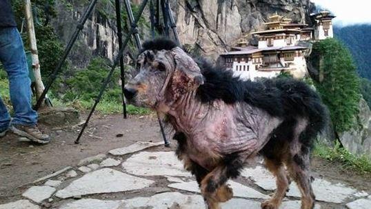 Transformarea uluitoare a unui caine abandonat in munti. Cum arata la 3 luni dupa ce a fost salvat