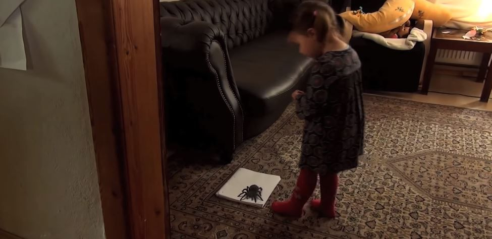 O fetita intra in camera si observa un paianjen urias pe covor. Reactia micutei depaseste orice asteptare