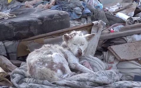 Abandonata si lasata sa moara de foame. Ce s-a intamplat cu catelusa din poza dupa ce a fost salvata din groapa de gunoi