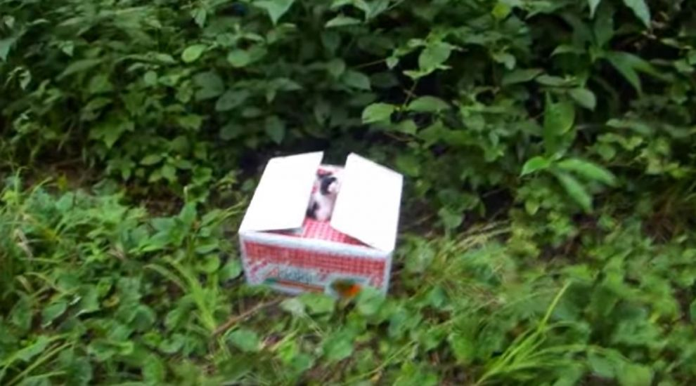 Se plimba linistit prin padure cand a vazut o cutie alba aruncata pe marginea potecii. Ce a descoperit i-a schimbat ziua