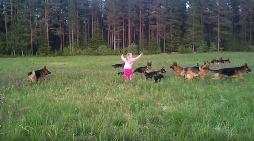 O fetita se afla pe o pajiste inconjurata de o multime de caini lupi. Ce se intampla cand micuta ridica mainile spre cer
