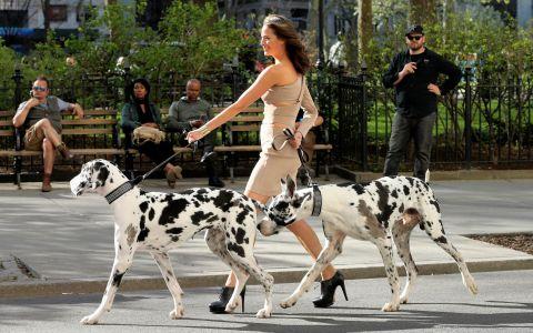 A iesit sa plimbe cainii intr-o rochie ultra mulata si pe tocuri de 12 cm. Imaginea fabuloasa care i-a hipnotizat pe newyorkezi