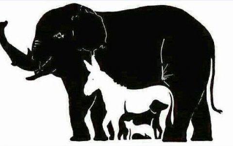 Testul care iti pune la incercare puterea de concentrare. Cate animale vezi in imagine: tu le-ai gasit pe toate 16?