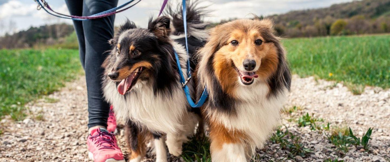 O fosta politista olandeza a venit pe jos pana in Romania pentru a ajuta cainii fara stapan