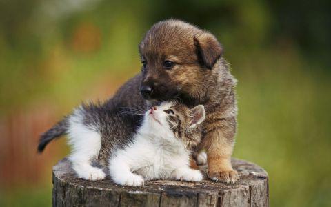 Cele mai frecvente greseli pe care stapanii de animale de companie le fac. Te regasesti?