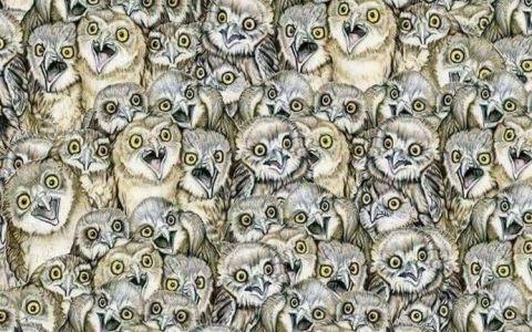 E mai greu decat iti imaginezi. Tu observi unde este pisica in aceasta imagine?
