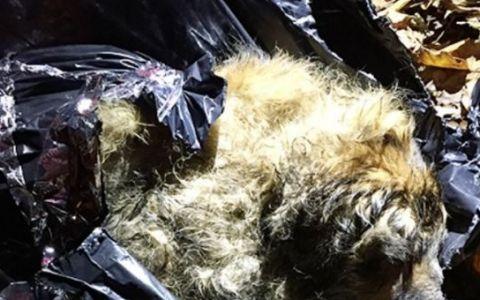 A fost abandonat intr-un sac de gunoi in padure, dar a avut noroc. Ce s-a intamplat cu acest caine