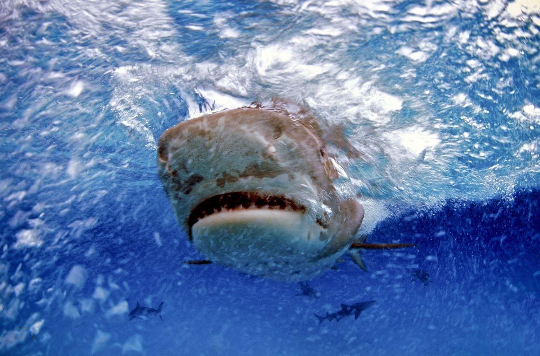 Un barbat a supravietuit dupa ce a fost atacat de un rechin, un sarpe si un urs