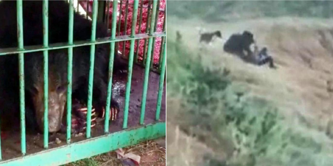 Un barbat a fost omorat de un urs in timp ce incerca sa isi faca un selfie