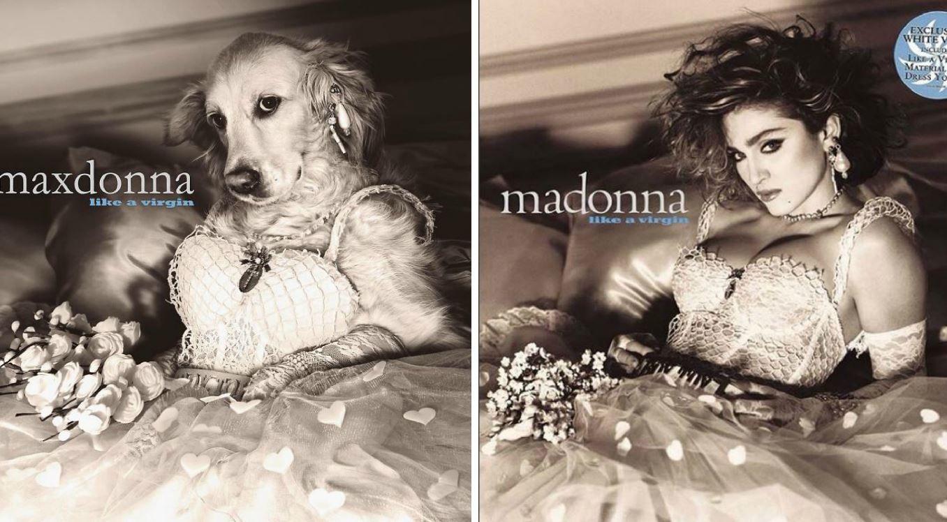 Câinele care recreează fotografiile Madonnei cucerește internetul
