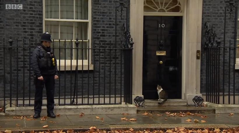 Larry, celebrul motan al premierului britanic primește o mână de ajutor de la un polițist. Clipul BBC, viral