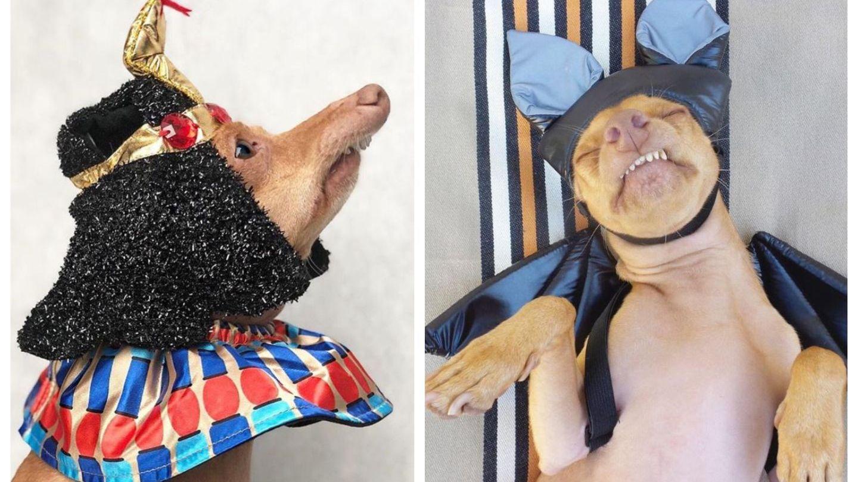 Acest câine a devenit mascota internetului pentru felul în care se îmbracă. E simpatic foc!