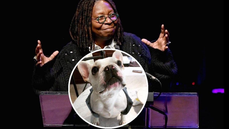 Whoopi Goldberg își însoară câinele cu o bdquo;englezoaică  get-beget. Actrița face petrecere mare