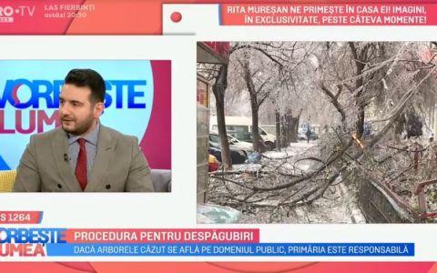 VIDEO Procedura pentru despăgubiri în cazul mașinilor distruse de copaci