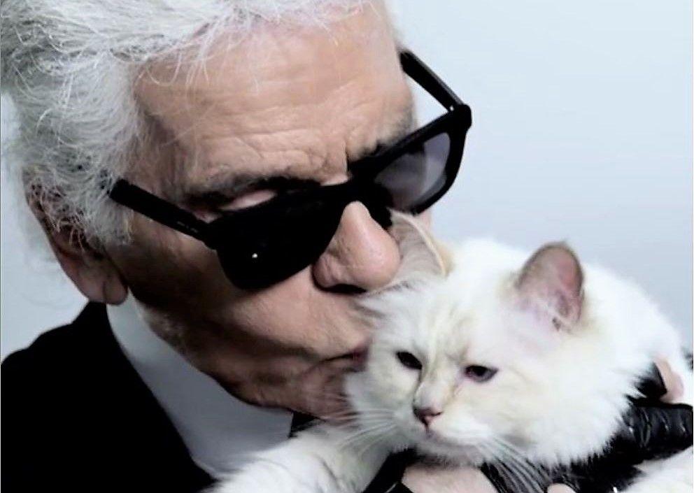 Choupette, povestea incredibilă a celei mai bogate pisici din lume. Stăpânul ei voia să se însoare cu ea