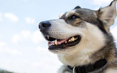 VIDEO Câinii care vindecă suflete deținuților
