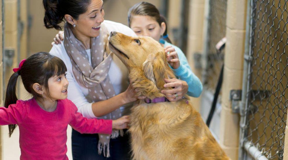 VIDEO Mobilizare pentru adopția câinilor