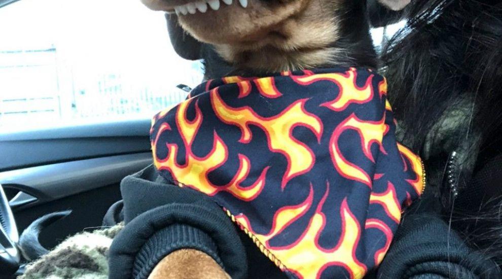Oz, noua senzație de pe Instagram! Cu ce este special acest câine