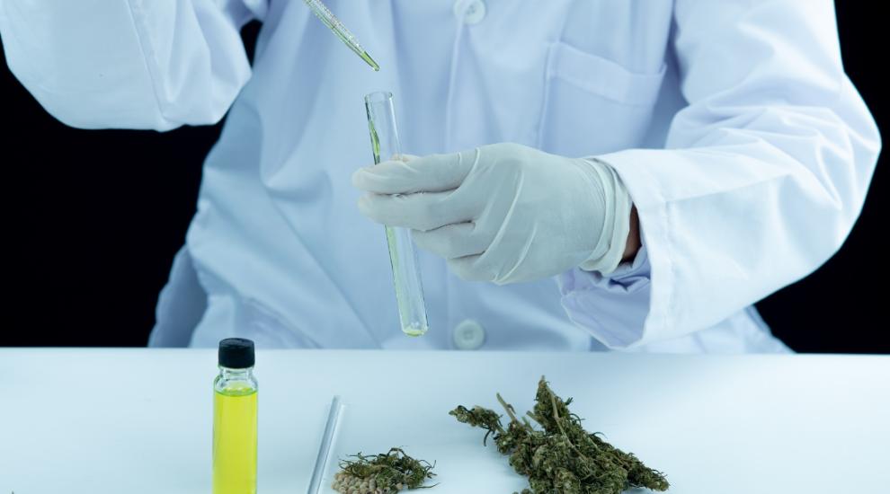 (P) Despre gripe, răceli și uleiul CBD: beneficii, efecte și statut legal