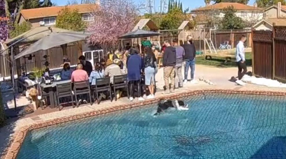 """Câinele care """"merge"""" pe apă a devenit viral! De ce a strâns acest clip peste 2 milioane de vizualizări?"""