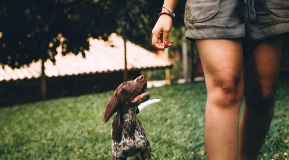 (P) Cum îți poți ajuta câinele să-și întărească sistemul imunitar