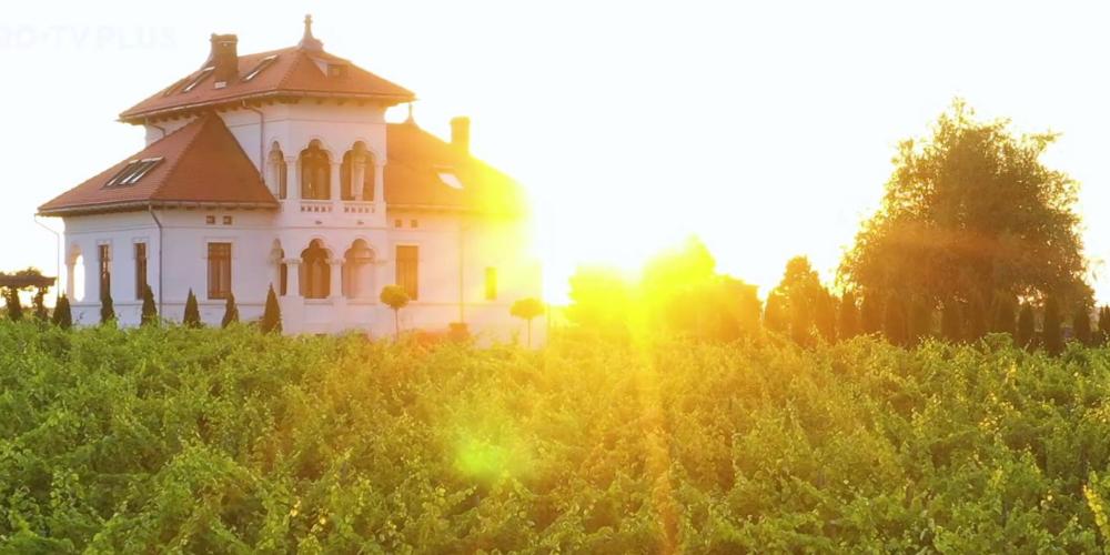 Wine Trips România   Descoperind vestitul Negru de Drăgășani la Crama Avincis