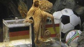 Cel mai tare transfer al verii: caracatita Paul are oferta de 100.000 de euro!
