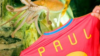 SENZATIE! Caracatita Paul a primit un tricou personalizat al Spaniei si o statuie de bronz! FOTO