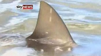 VIDEO: Nu o sa-ti vina sa crezi! Un teren de golf a fost INVADAT de ... rechini! Vezi cum