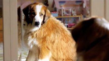 VIDEO: Povestea tulburatoare a unui caine care a redescoperit bucuria de a trai! :)