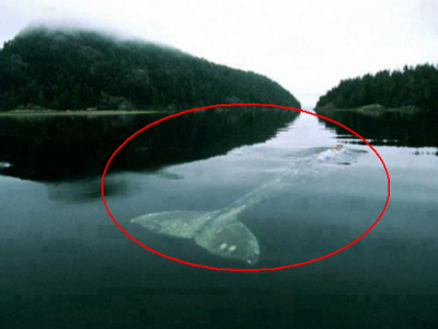 """Povestea acestei balene este cutremuratoare:""""Plange in fiecare seara, de 20 de ani, de una singura!"""" Vezi ce i s-a intamplat:"""
