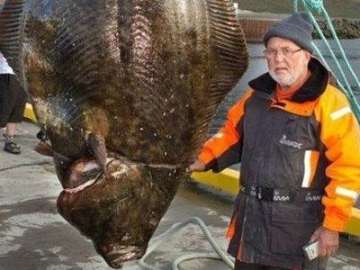 Un pescar a prins MONSTRUL apelor din Islanda: E de trei ori mai mare decat un om! Abia intra in poza:
